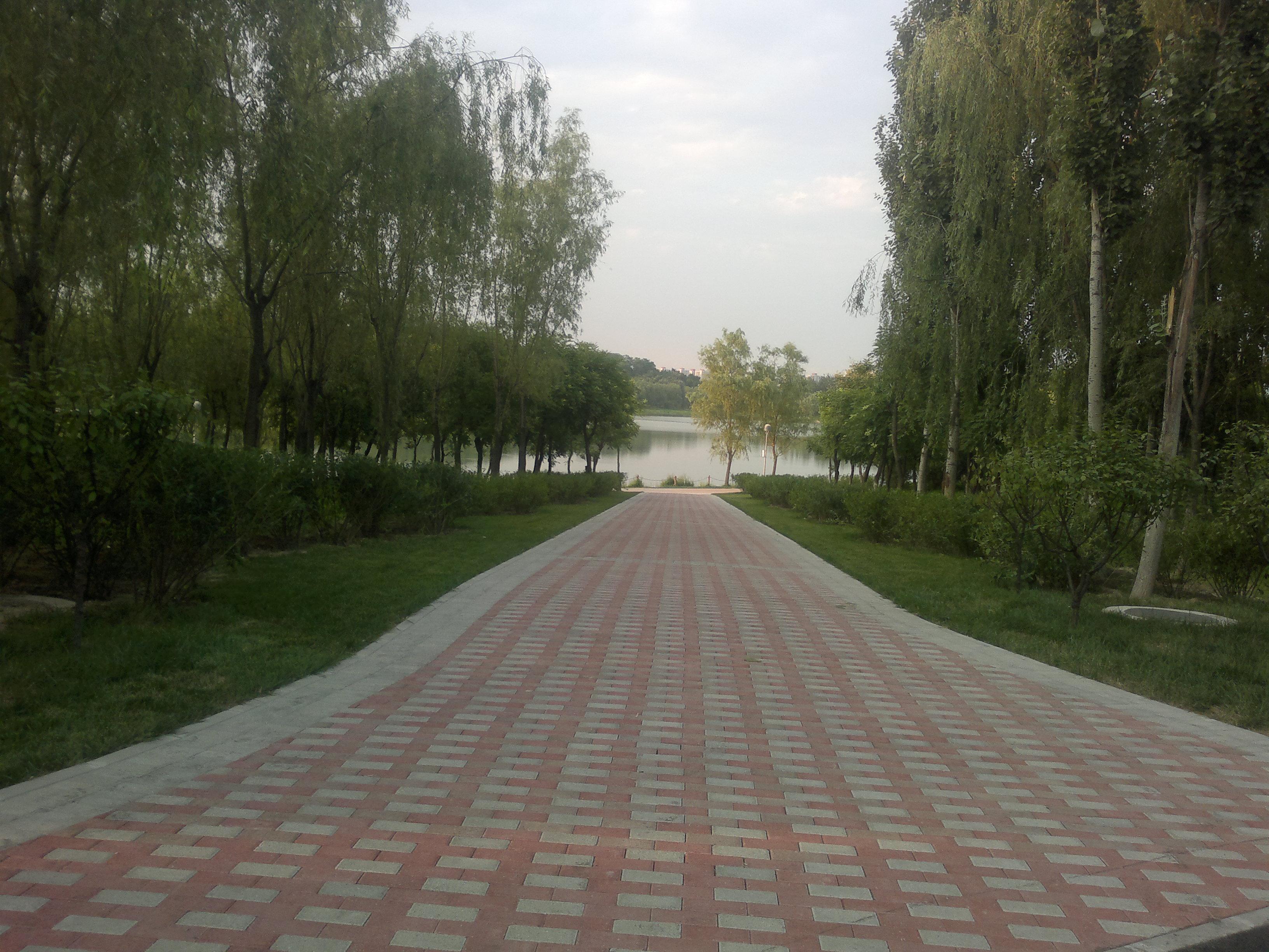 北京市奥林匹克森林公园 - 案例信息 - 河南省现代